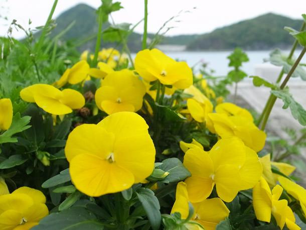 三角西港公園に咲く花