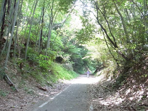 ゆうかファミリーロードの森のトンネル